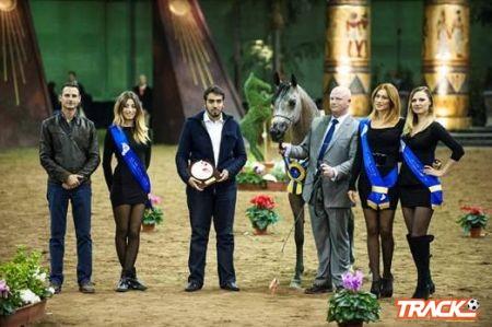 """المهرة """"بيفنكا"""" تحقق صافة بطولة أوروبا"""